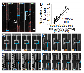Biased migration of confined neutrophil-like cells in asymmetric hydraulic environments