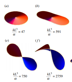 Minimal surfaces bounded by elastic lines