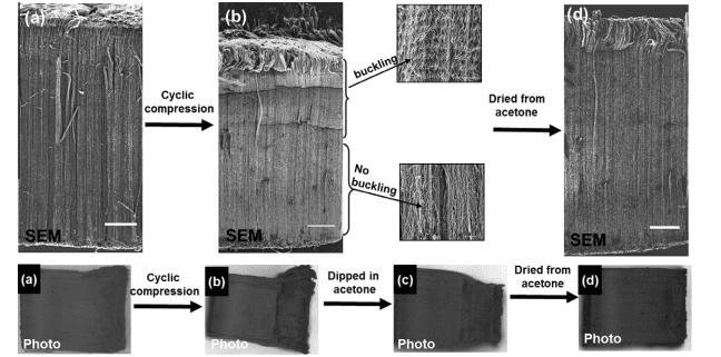 Deformation and capillary self-repair of carbon nanotube brushes