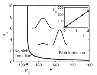 The size, shape, and dynamics of cellular blebs
