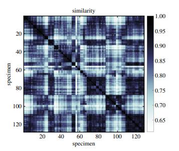 Planar morphometrics using Teichmüller maps