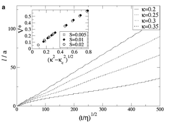 Dynamic instability of a growing adsorbed polymorphic filament