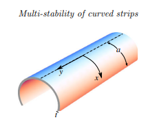 Multistability of spontaneously curved anisotropic strips