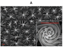 Self-organization of a mesoscale bristle into ordered hierarchical helical assemblies