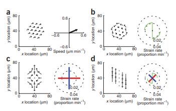 Tissue Tectonics: morphogenetic strain rates, cell shape change and intercalation