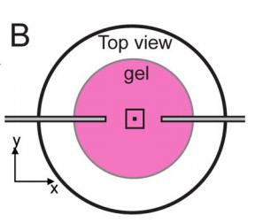 Strain induced alignment in collagen gels