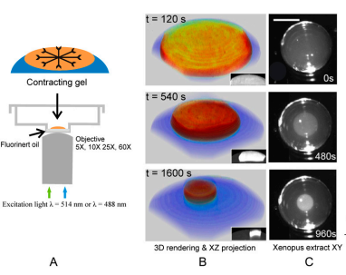 A quantitative analysis of contractility in active cytoskeletal protein networks