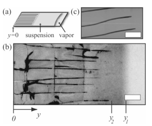 Dynamics of fracture in drying suspensions