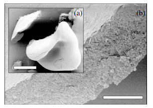 Buckling of drying droplets of colloidal suspensions,