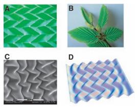 Self-organized origami