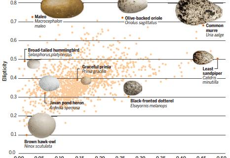 Avian egg shape: Form, function, and evolution