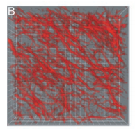 Relating microstructure to rheology of a bundled and cross-linked F-actin network in-vitro