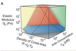 Elastic behavior of cross-linked and bundled actin networks,