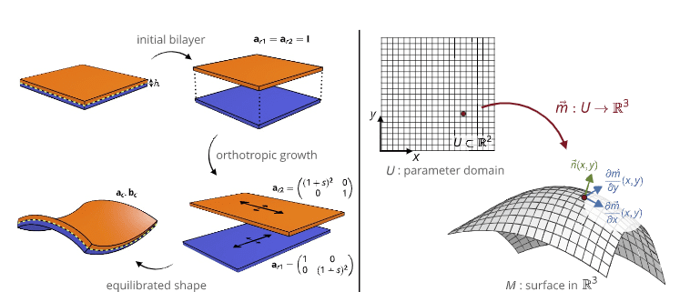 Growth patterns for shape-shifting elastic bilayers