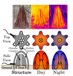 Termite mounds harness diurnal temperature oscillations for ventilation