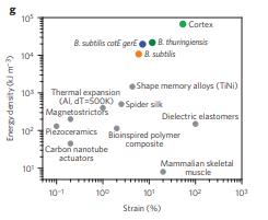 Bacillus spores as building blocks for stimuli-responsive materials and nanogenerators