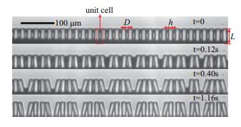 Continuum dynamics of elastocapillary coalescence and arrest