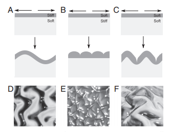 Gyrification from constrained cortical expansion