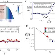 A multiphase theory for spreading microbial swarms and films