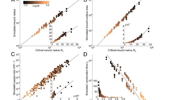 Morphogenesis of termite mounds