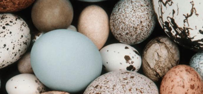 Cracking Egg Mystery