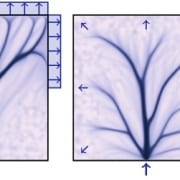 Flow-Driven Branching in a Frangible Porous Medium