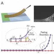 Static adhesion hysteresis in elastic structures